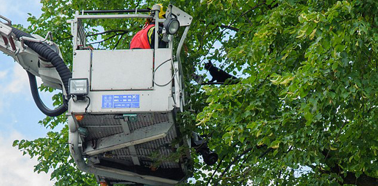 cherry picker hire to rescue cat