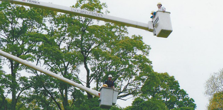 cherry picker hire tree top rides
